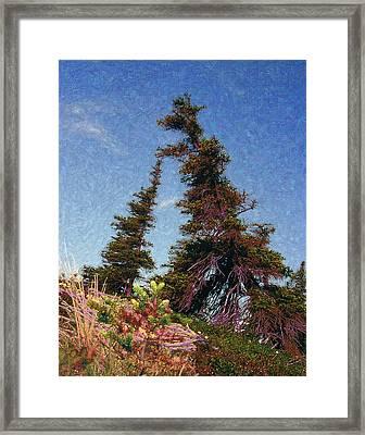 Northern Tree Line #1 Framed Print by Alice Ramirez