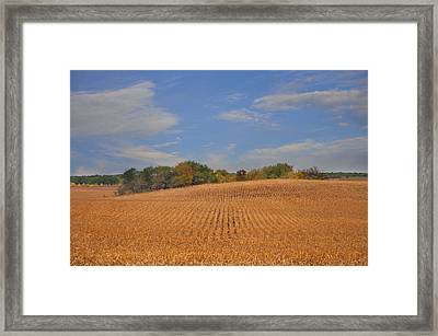 Northwest Iowa Golden Corn Field Framed Print