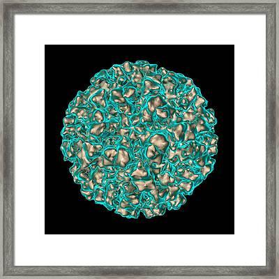 Norwalk Virus Framed Print