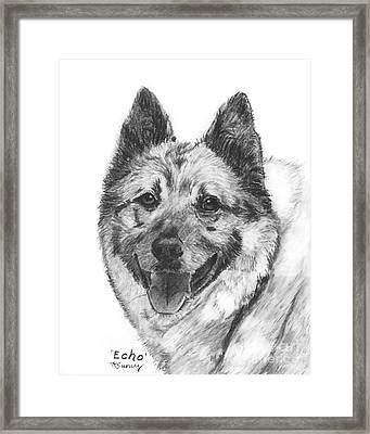 Norwegian Elkhound Sketch Framed Print by Kate Sumners
