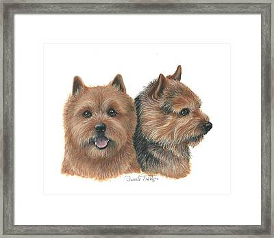 Norwich Terrier Framed Print by Daniele Trottier