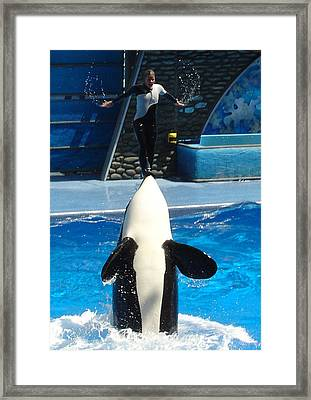 Framed Print featuring the photograph Nose Dive by David Nicholls