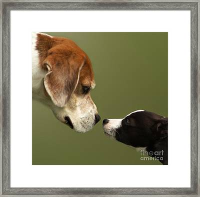 Nose To Nose Dogs 2 Framed Print