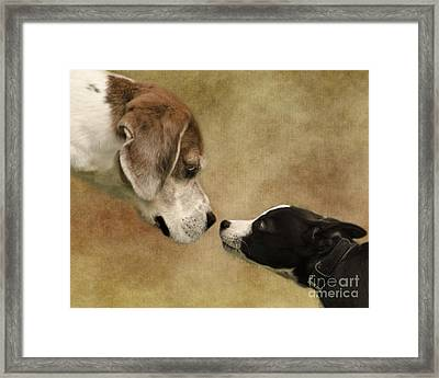 Nose To Nose Dogs Framed Print