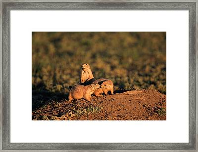 Nose To Nose  Framed Print by Keith R Crowley