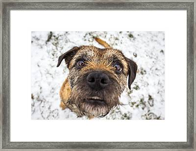 Framed Print featuring the photograph Nosey Dog. by Gary Gillette