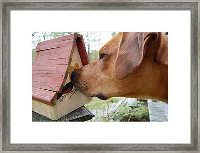 Nosey Framed Print by Mim White
