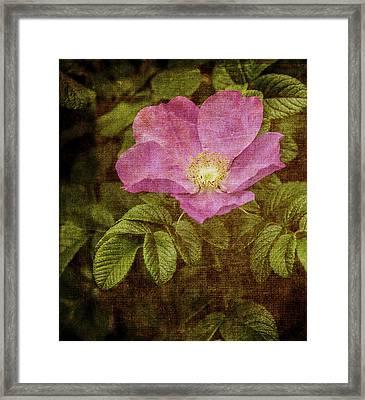 Nostalgic Rose Framed Print by Karen Stephenson