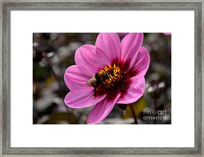 Framed Print featuring the photograph Nosy Bumble Bee by Scott Lyons