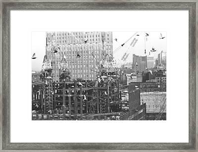 Nosy Pigeons  Framed Print