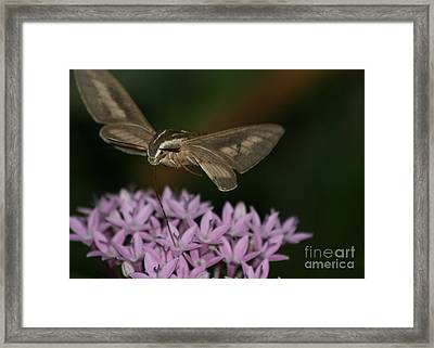 Not A Hummer Framed Print by Marty Fancy