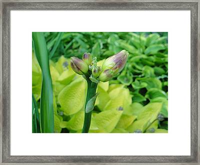 Not Always About The Bloom Framed Print
