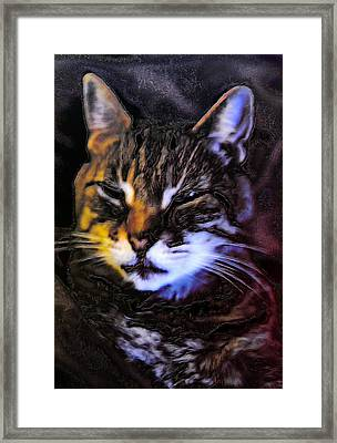 Not Amused Framed Print
