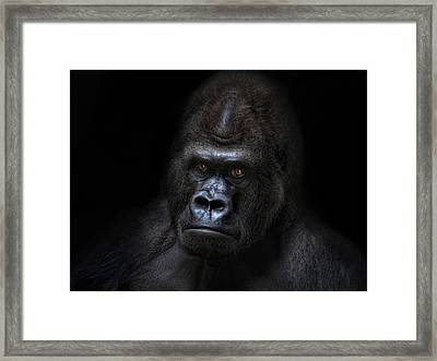 Not Amused Framed Print by Joachim G Pinkawa