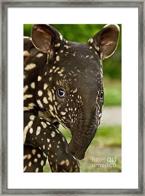 Not Exactly An Elephant Framed Print