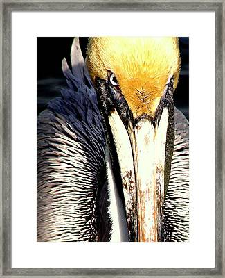 Framed Print featuring the photograph Not My Fish by Antonia Citrino