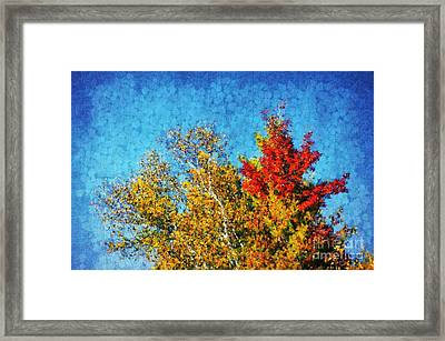 Not Only Some Other Autumn Trees - 09 Framed Print by Variance Collections