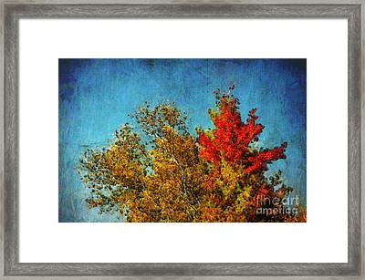 Not Only Some Other Autumn Trees - A03a Framed Print by Variance Collections
