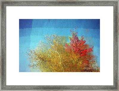 Not Only Some Other Autumn Trees - C02j01 Framed Print by Variance Collections