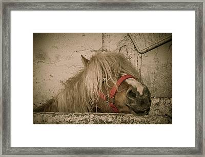 Not So Innocent Framed Print