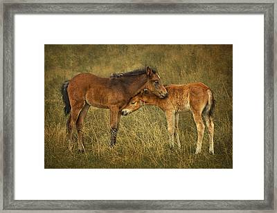 Not So Wild Wild Horses Framed Print by Priscilla Burgers
