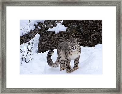 Not Too Close -  Please Framed Print by Sandra Bronstein