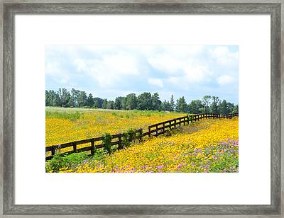 Notch In The Fence Wild Flowers Framed Print