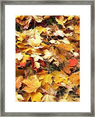 Framed Print featuring the photograph Nothing But Leaves by Mike Ste Marie