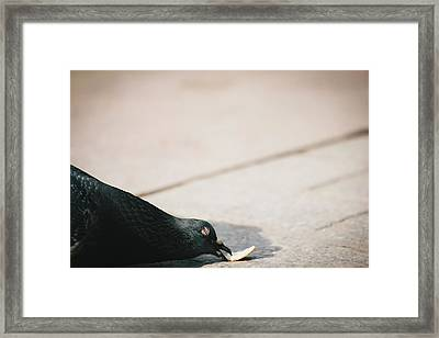 Nothing Like A Peace Of Bread Framed Print