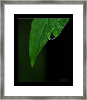 Notice It Framed Print by Marija Djedovic