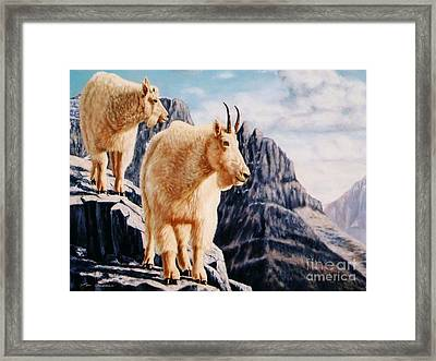 Notice On High Mountain Goats Framed Print by Tom Chapman