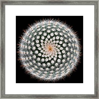 Notocactus Scopa Framed Print