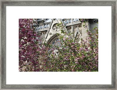 Notre Dame In April Framed Print by Jennifer Ancker