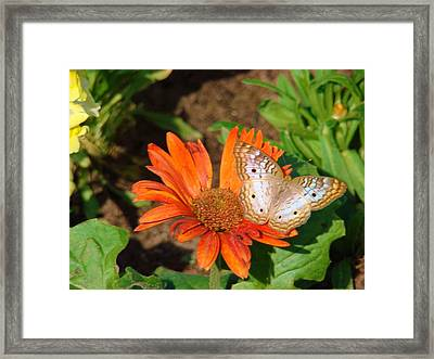 Nourishment Framed Print by Van Ness