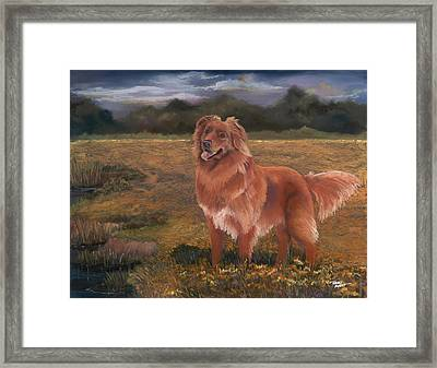 Nova Scotia Duck Tolling Retriever Framed Print