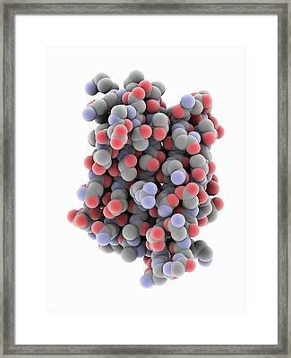 Novel Protein Framed Print by Laguna Design