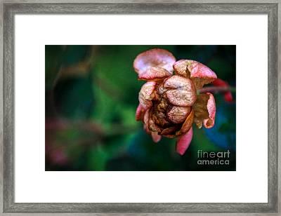 November Bloom  Framed Print