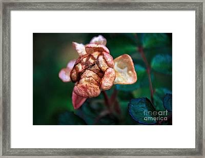 November Bloom Part 2 Framed Print