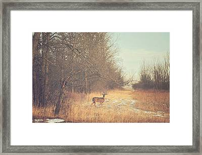 November Deer Framed Print by Carrie Ann Grippo-Pike