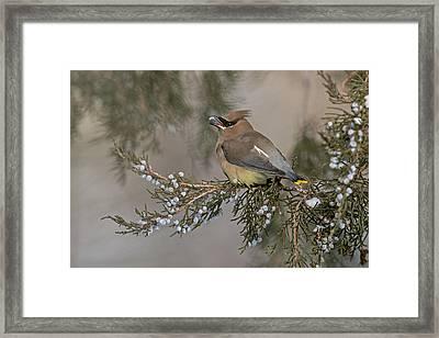 November Feast Framed Print by Sandy Sisti
