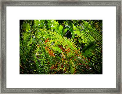 Framed Print featuring the photograph November Ferns by Adria Trail