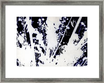 November Flowers Framed Print by Paul Shefferly