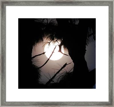 Florida November Full Moon Framed Print