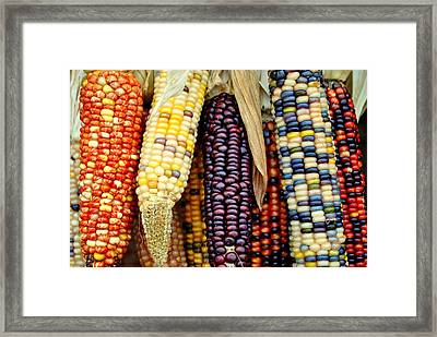 November Harvest Framed Print by Frozen in Time Fine Art Photography