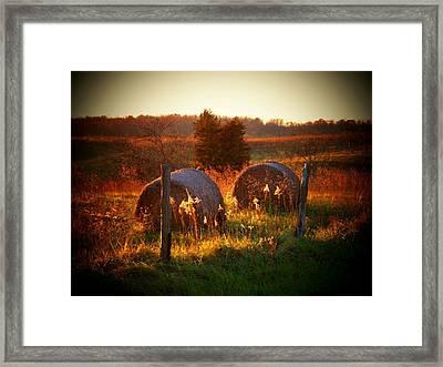 November Hayrolls Framed Print by Joyce Kimble Smith