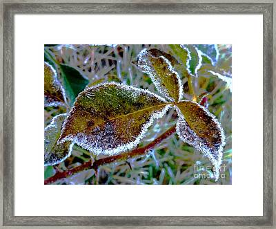 November_ Last Walz Framed Print
