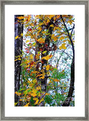 November Leaves Framed Print by Leon Hollins III