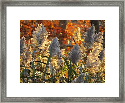 November Lights Framed Print