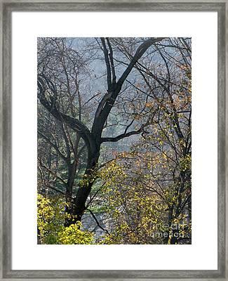 November Morning Framed Print by Melissa Stoudt