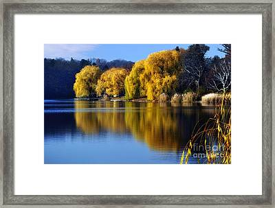 Autumn Weeping Willows Framed Print